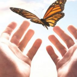 Wings of Love – Butterfly Release